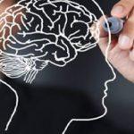 Ученые из НИУ ВШЭ и Гарварда выяснили как работает визуальный поиск в мозге человека