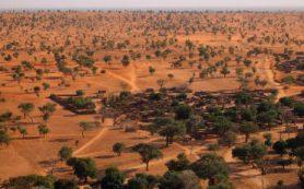 Искусственный интеллект обнаружил сотни миллионов деревьев в Сахаре