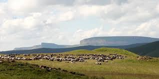 Скотоводы бронзового века оказались не такими уж мобильными