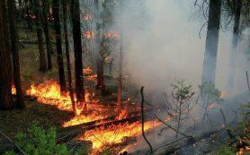 Определены условия возникновения лесных пожаров