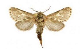 Энтомологи назвали новый вид бабочек именем демиурга Ульгеня
