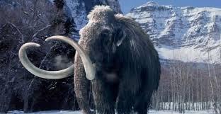 Ученые реконструировали ДНК мамонта старше миллиона лет
