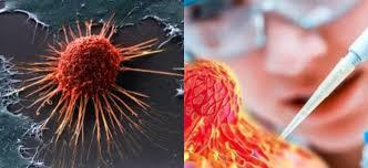 Биологические часы против рака