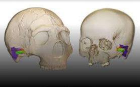 Неандертальцы были способны воспринимать и воспроизводить человеческую речь