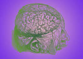 Через сутки после смерти в коре человеческого мозга зафиксировали экспрессию генов