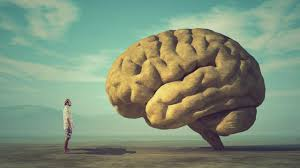 Омоложение иммунитета омолаживает мозг