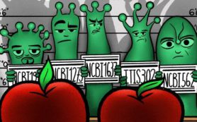 «Серебряная» технология: разработка ученых обнаружит химикаты во фруктах и овощах