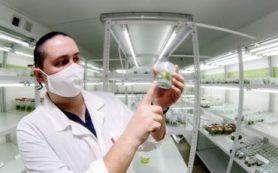 Клондайк растений: краснокнижные виды выводят в пробирке