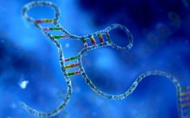 Некодирующие типы ДНК