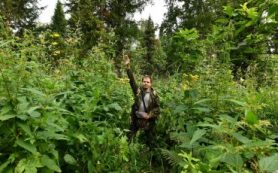 Исследователи выяснят причины гигантизма растений в «сибирских джунглях»