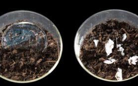 Новый метод может сделать пластиковый мусор пригодным для компостирования дома