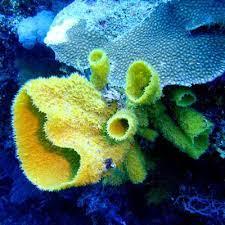 Вещество из морских губок губит раковые клетки