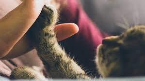 Отношения кошек и хозяев предложили разделить на пять типов