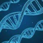 Ночное бодрствование добавляет мутаций в ДНК