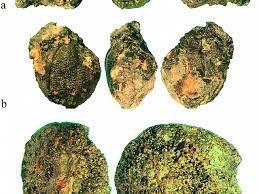 Доисторические шахтёры отдавали приготовление еды «на аутсорсинг»