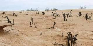 Остановить растущую пустыню позволит проект ученых КалмГУ