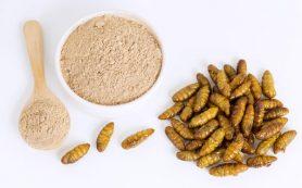 Протеиновые добавки из насекомых — назначение, потенциал