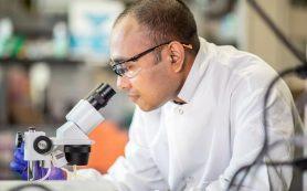 Новый орган-на-чипе показал взаимодействие между клетками крови и опухолями рака яичников