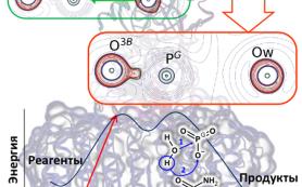Раскрыт секрет фермента без «аргининового пальца», но эффективно передающего клеточные сигналы