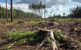 Рост вырубки горных лесов в Юго-Восточной Азии приводит к увеличению выбросов парниковых газов