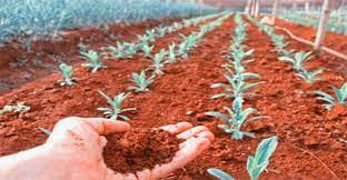 Выращивать растения на Марсе нужно не под палящим Солнцем