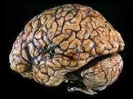 Мозг не для ума