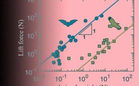 Плаванье и полет животных математически описали в рамках одной модели