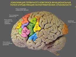 Письмо из мозга
