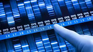 Насколько лабораторный рак похож на настоящий?
