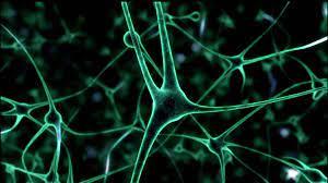 У человеческих нейронов нашли множественные контакты