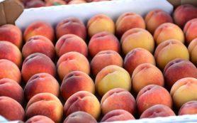 Проявитель яда во фруктах и овощах