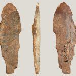 Люди каменного века использовали скребки из костей для изготовления кожи и шкурок