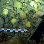 Фридайверы наткнулись на клад римских золотых монет у берегов Испании