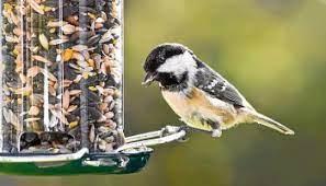 Птицы узнают друг у друга о неправильной еде